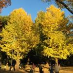 のんびり秋の上野公園 (=^・^=).。.:*♡
