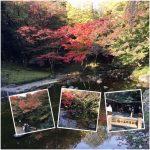 日本庭園と紅葉の小石川後楽園