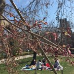 錦糸公園の桜はまだつぼみ