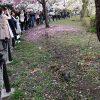 上野公園でお花見