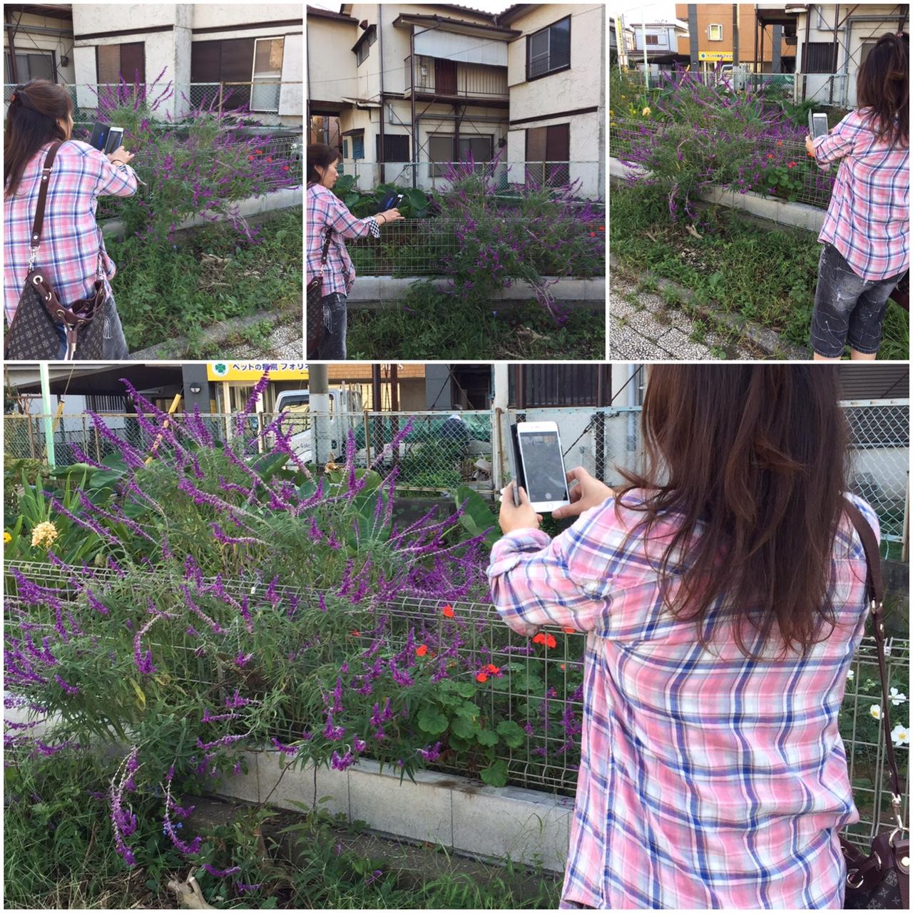 船橋市長津川 川沿いに咲く花